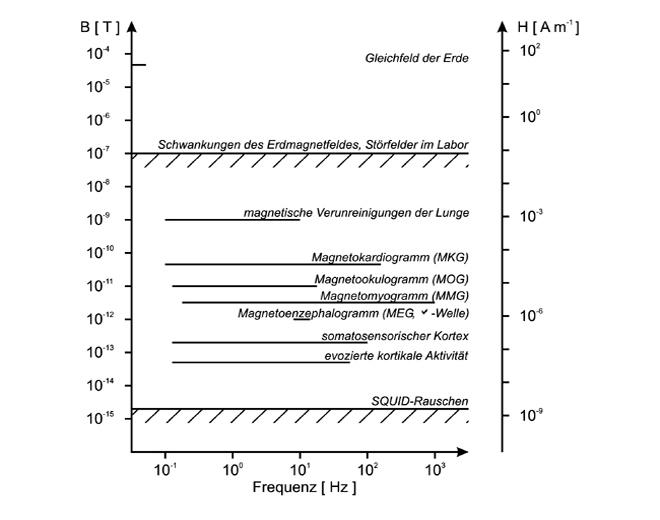 Bild6_MagnetfeldstrkenbiomagnetischerFelderundStrfelder_2.jpg